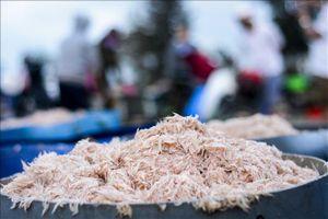Cà Mau: 39 hộ dân xã Khánh Bình Tây đề nghị được ra biển khai thác ruốc