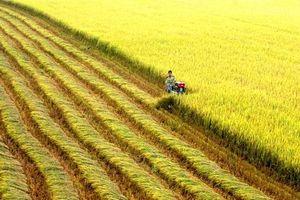 Nông nghiệp thông minh phải giải bài toán 'dồn điền đổi thửa'