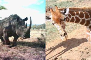 10 kiểu tạo dáng bá đạo khi chụp ảnh tự sướng của động vật trong tự nhiên