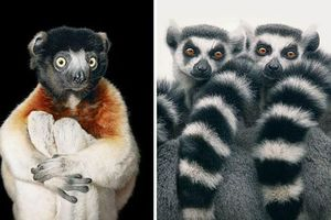 Vẻ đẹp của 10 loài động vật sắp bị tuyệt chủng