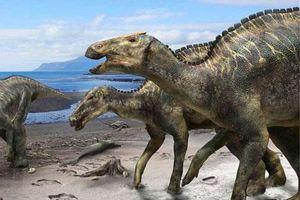 Trái đất bị 'căng thẳng' trước sự kiện tiểu hành tinh xóa sổ loài khủng long