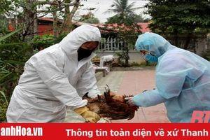 Nỗ lực giám sát dịch bệnh trên đàn vật nuôi