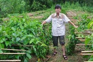 Nhà khoa học người Sán Chay với công trình nghiên cứu cây thìa canh hỗ trợ điều trị bệnh tiểu đường