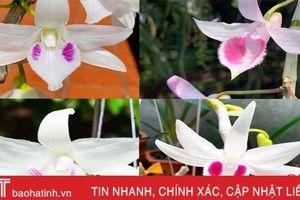 Nhân giống hoa lan cho thu nhập tốt ở Hà Tĩnh