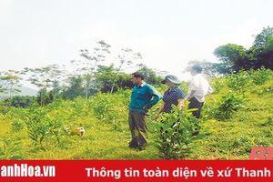 Huyện Ngọc Lặc phát triển rừng sản xuất gắn với bảo vệ rừng