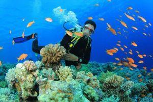 Du lịch nội địa Việt Nam được đánh giá phục hồi tốt