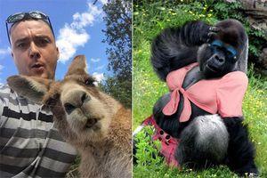Hài hước động vật tạo dáng chụp ảnh chuyên nghiệp hơn cả con người