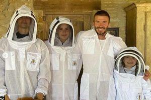 David Beckham và các con mặc đồ bảo hộ tiếp cận ong ngay trong sân nhà