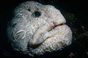 Những 'kẻ ăn thịt' đáng sợ dưới đại dương xanh