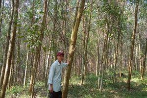 Bài 2: Doanh nghiệp 'chung tay' trồng rừng có chứng chỉ