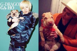 G-Dragon bị ném đá vì xem cún cưng như phụ kiện thời trang