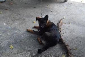Kỳ lạ vụ tranh chấp chó: Ăn cơm hộp, ở trụ sở
