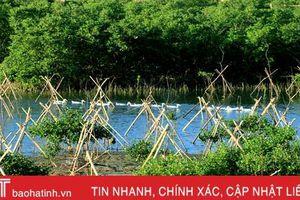 Trồng mới gần 33 nghìn cây rừng ngập mặn ở xã biển phía Nam Hà Tĩnh