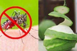 5 cách đuổi muỗi an toàn phòng dịch sốt xuất huyết, nhà có trẻ nhỏ nên dùng