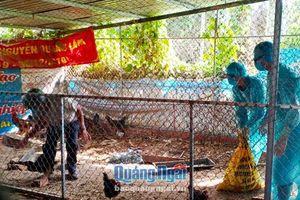 Thành phố Quảng Ngãi: Xuất hiện ổ dịch cúm H5N6