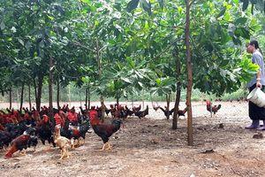 Nâng vị thế nông sản Thủ đô: Cần có chiến lược trong xây dựng thương hiệu