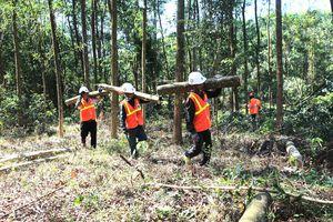Miền Trung: Rừng mất, đất cằn - Bài 3: Tái thiết, phát triển rừng bền vững