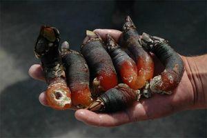 'Ngón tay quỷ' và loạt đặc sản biển hình dạng kỳ dị