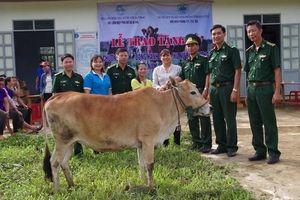 Tặng bò giống cho phụ nữ nghèo khu vực biên giới tỉnh Kon Tum