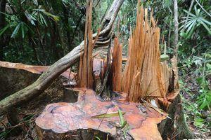 Hơn 5ha rừng ở Quảng Nam bị tàn phá