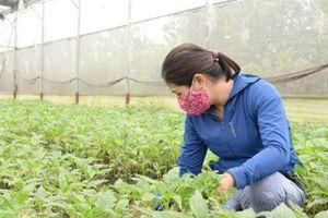 Hà Nam: Liên kết trong sản xuất nông nghiệp hướng đến phát triển bền vững