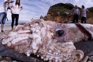 21 bức ảnh những loài động vật kỳ lạ huyền bí có thật trên Trái đất mà cứ ngỡ chỉ xuất hiện trong thần thoại