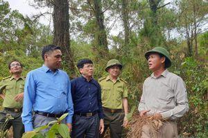 Hoan nghênh sáng kiến lắp camera giám sát lửa rừng của Nghệ An
