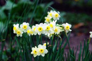 9 loại hoa đẹp nhưng cực độc, tuyệt đối không trồng trong nhà có trẻ nhỏ