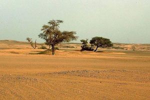 Lý giải gây sốc về việc Sahara biến thành sa mạc