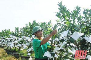 Thanh Hóa: Làm giàu từ mô hình trồng cây cảnh trên 'cánh đồng bỏ hoang'