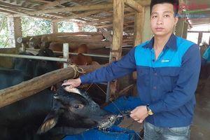 Hiệp Hòa: Khẳng định sức sống nông trại giữa mùa dịch Covid-19