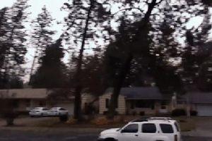 Cây xanh bị quật ngã trong mưa giông: 4 cảnh báo từ Cơ quan Thời tiết quốc gia Mỹ!