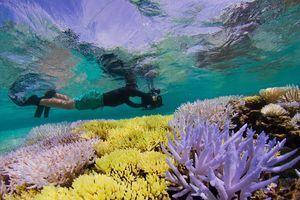 Con người sẽ thế nào nếu san hô biến mất?