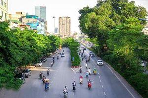 Hà Nội: Trồng cây xanh nhiều tầng, báo động tình trạng ăn trộm cây cảnh