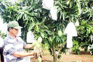 Minh bạch nguồn gốc cho nông sản: Cần nhân rộng xây dựng mã số vùng trồng