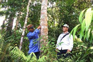 Đề xuất nhiều giải pháp cứu rừng