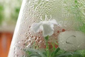 Hạt giống 32.000 năm tuổi hồi sinh đã ra hoa một cách thần kỳ