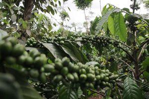 Hỗ trợ nông sản Việt Nam trước 'ngưỡng cửa' EU