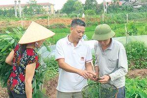 Phú Thọ: Mô hình nuôi ốc nhồi mang lại hiệu quả kinh tế cao