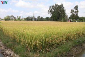 Sóc Trăng: Hiệu quả từ tái cơ cấu ngành nông nghiệp