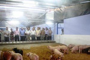 Tổ hợp sản xuất, chế biến nông sản hữu cơ quy mô lớn tại Huế