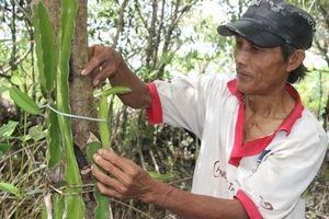 CLIP: Gặp 'gã khùng' ở Cà Mau với mô hình trồng thanh long... không giống ai!