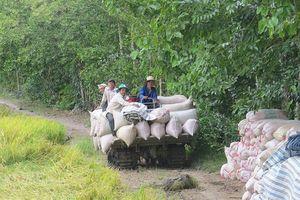 Hợp tác xã Tân Bình thực hiện chuỗi giá trị liên kết tiêu thụ lúa với doanh nghiệp