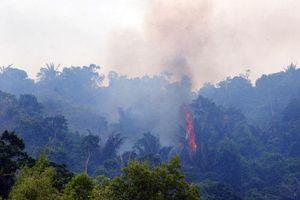 Đoàn viên, thanh niên tham gia phát hiện, ngăn ngừa cháy rừng