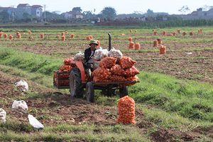 Bắc Ninh quan tâm xây dựng thương hiệu, nhãn hiệu nông sản
