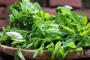 CLIP: Điểm danh các loại rau trồng quanh năm tại nhà