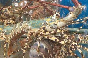 Bỏ túi ngay những nguyên tắc 'vàng' khi ăn hải sản để tránh ngộ độc