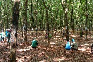 Người đàn ông tử vong trong tư thế treo cổ ở Bình Phước