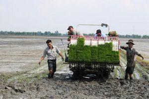 Phát huy các giải pháp giảm giống lúa hiệu quả