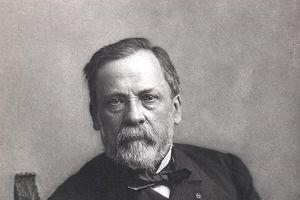 Louis Pasteur - từ sinh viên sư phạm đến cha đẻ của vaccine phòng dại